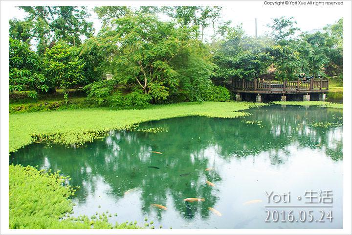 160524 花蓮光復-馬太鞍欣綠農園 (03)