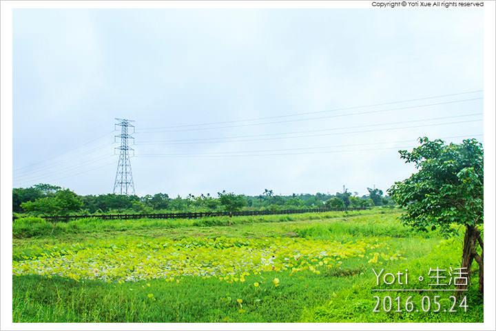 160524 花蓮光復-馬太鞍欣綠農園 (12)