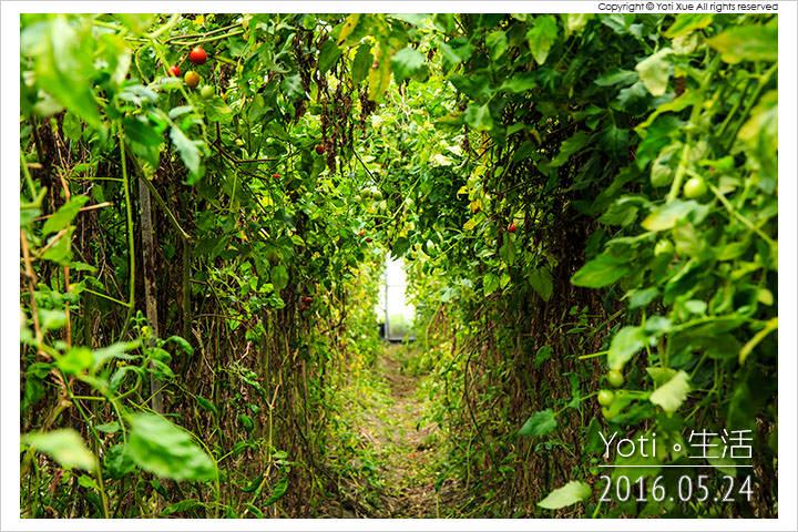 160524 花蓮壽豐-江玉寶生態農場 (10)