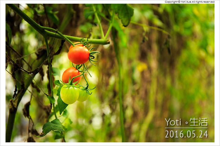 160524 花蓮壽豐-江玉寶生態農場 (11)