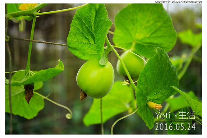 160524 花蓮壽豐-江玉寶生態農場 (16)