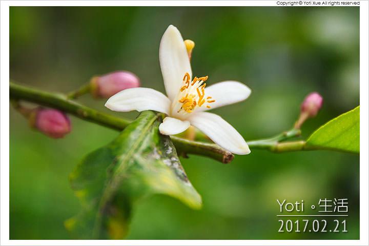 花蓮瑞穗-彌勒有機果園