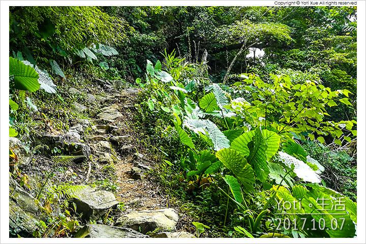 花蓮太魯閣-大禮大同步道(同禮步道)
