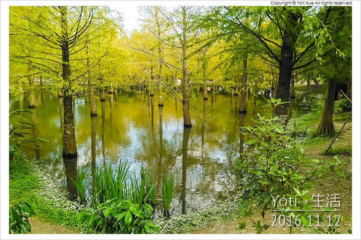 花蓮壽豐-鈺展苗圃-落羽松森林