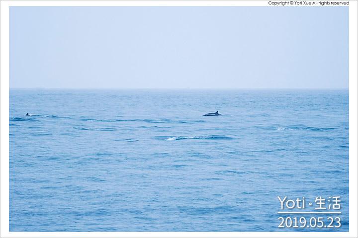 花蓮市區-多羅滿賞鯨