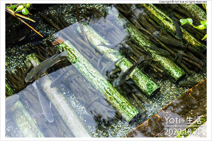 花蓮光復-尋找馬太鞍的秘密-樹豆傳說濕地探險記