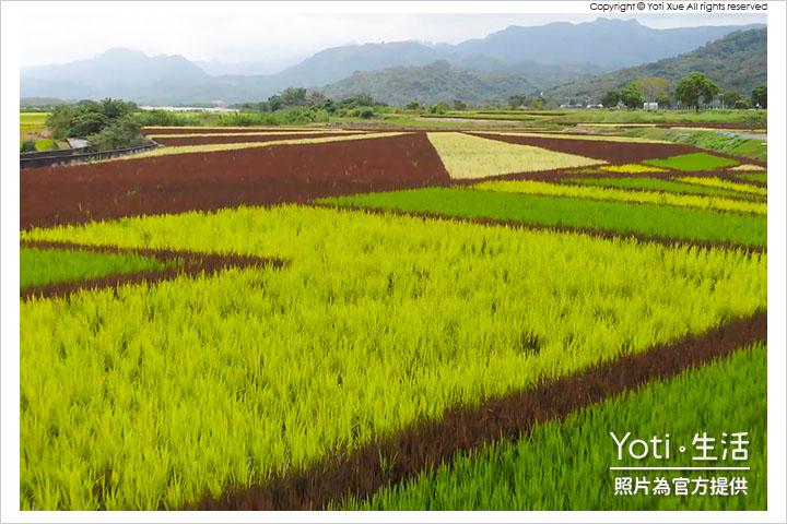 花蓮玉里-縱谷彩稻藝術季-豐收採稻園遊會 (03) 東里稻田彩繪空拍照