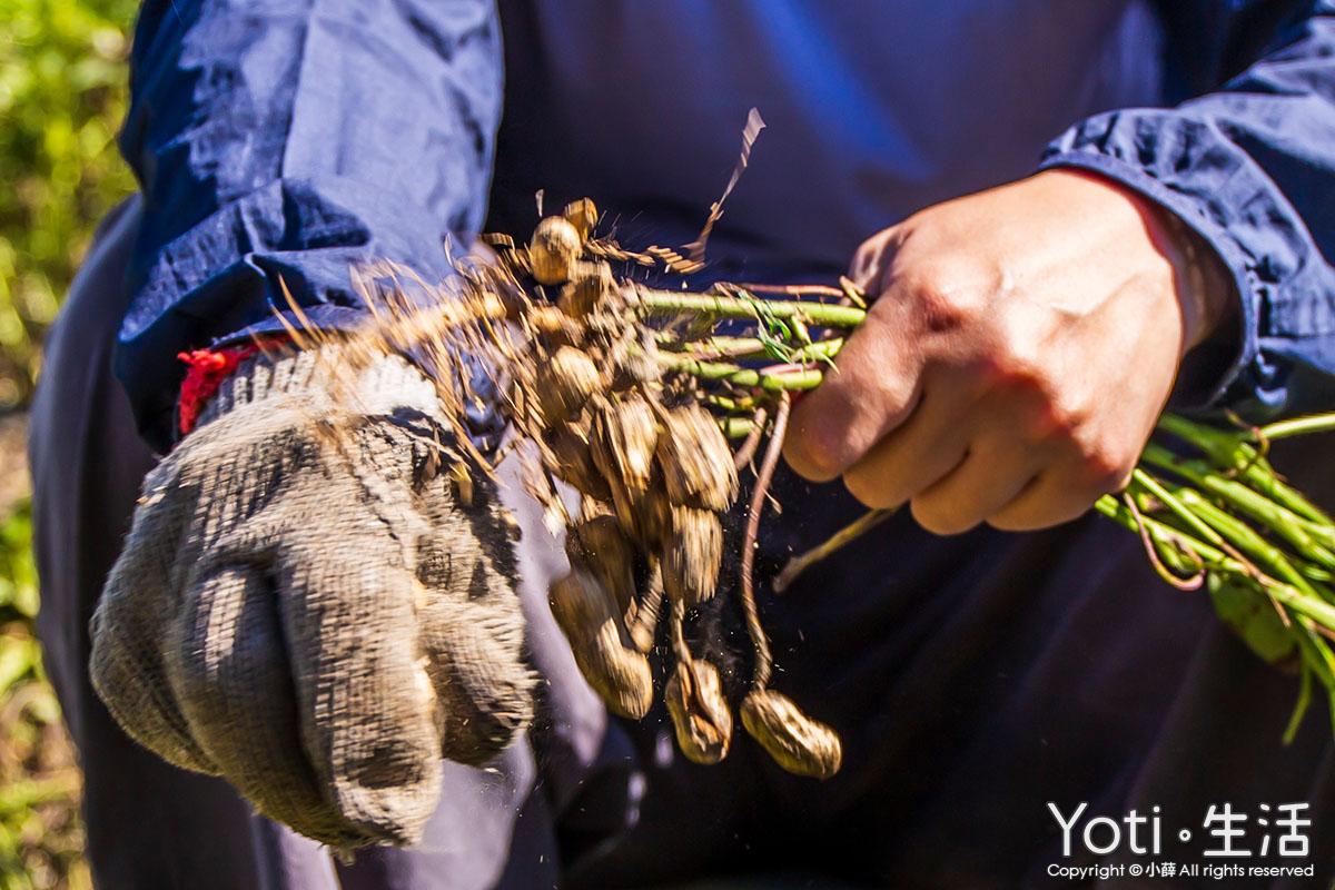 台東遊程-走趣東海岸住一晚-從木雕藝術村部落-彩虹村社區-稻香農遊單車行-探索不同風貌的台東二日遊